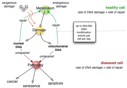 dna damage mechanisms and repair with regard to cancer: an